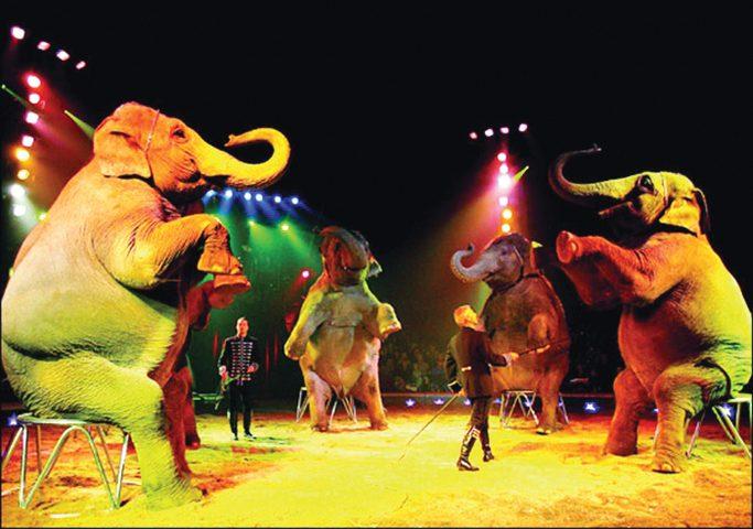 شاهد عراك الفيلة أثناء العرض في سيرك روسي