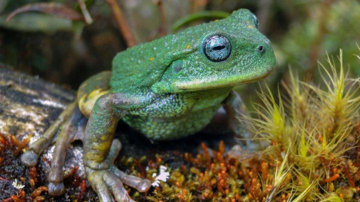 علماء يعلنون اكتشاف حيوان جديد في غابات الأمازون