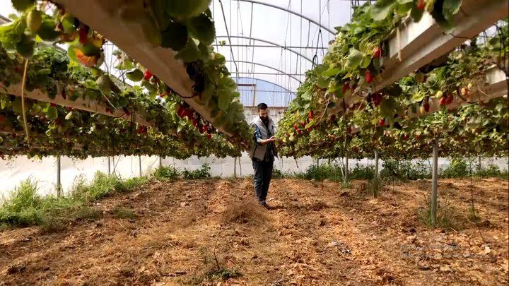 جولة أوروبية (5)  الزراعة في الضفة الغربية