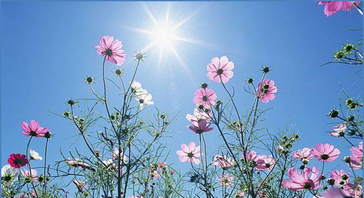 الطقس: أجواء ربيعية وارتفاع طفيف على درجات الحرارة