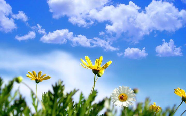 الطقس: أجواء معتدلة ودرجات حرارة حول معدلها السنوي العام