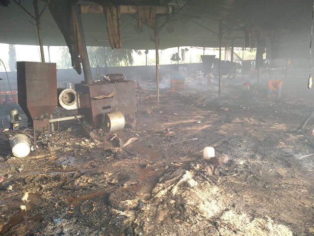 نفوق 10 آلاف صوص دجاج إثر حريق مزرعة في بلدة قباطية