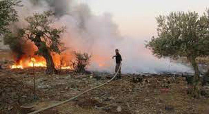 مستوطنون يحرقون الحقول الزراعية في بلدة جالود جنوب نابلس