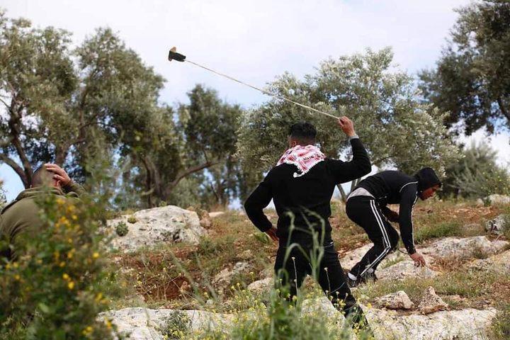 مستوطنون يقتلعون ويحطمون 50 شجرة زيتون جنوب الخليل