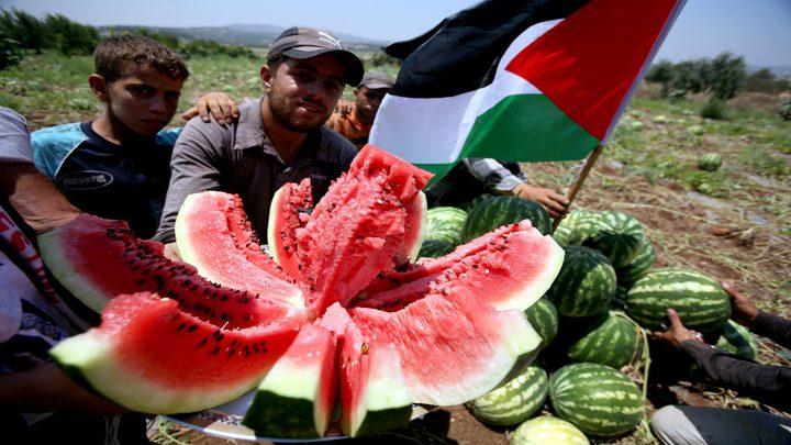 """""""الزراعة"""" تواصل منع استيراد البطيخ حماية للمنتج المحلي"""