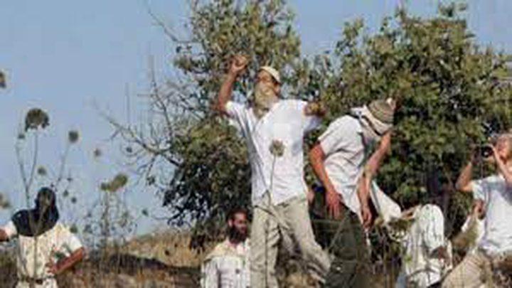 """مستوطنون يسرقون 110 """"بالات"""" قش جنوب نابلس"""