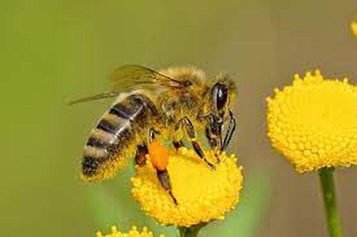 """""""لسعة النحل"""".. حقائق مذهلة يكشفها العلم"""