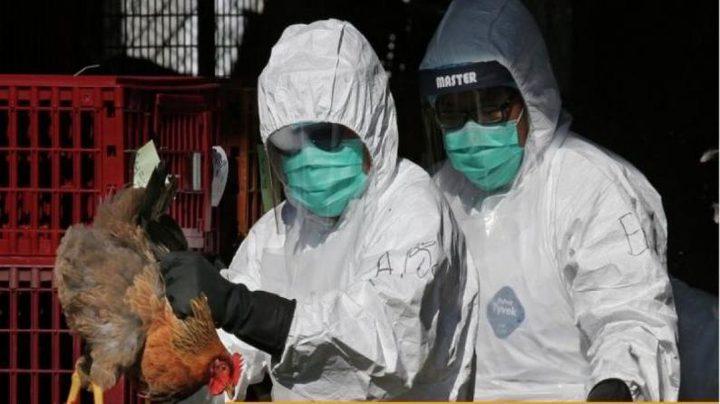 """الصحة العالمية: خطر انتشار """"H10N3"""" منخفض جداً"""