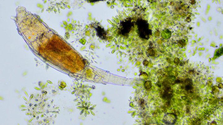 مخلوقات مجهرية تعود للحياة بعد نومها لمدة 24 ألف عاما !