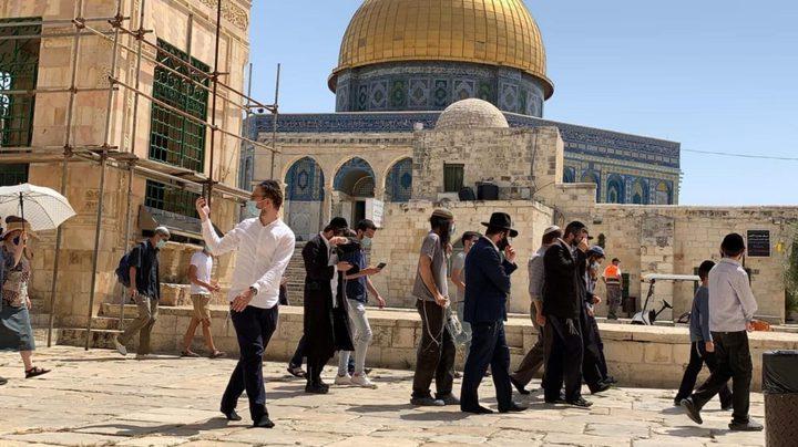 147 مستوطنا يقتحمون ساحات المسجد الأقصى