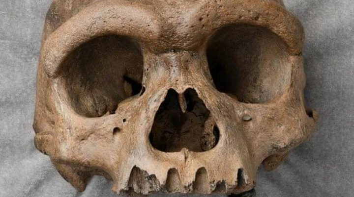 """جمجمة """"رجل التنين"""" تعيد صياغة مفهوم بداية البشرية على الأرض"""