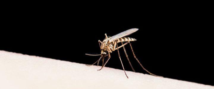 بعد 7 عقود.. الصين تعلن إنهاء الحرب على الملاريا