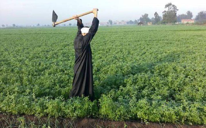 مصر تكشف عن ارتفاع حجم صادراتها الزراعية