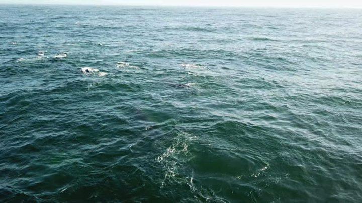 قارب عابر ينقذ سفینة إيرانية صغيرة من الغرق قادمة من الإمارات