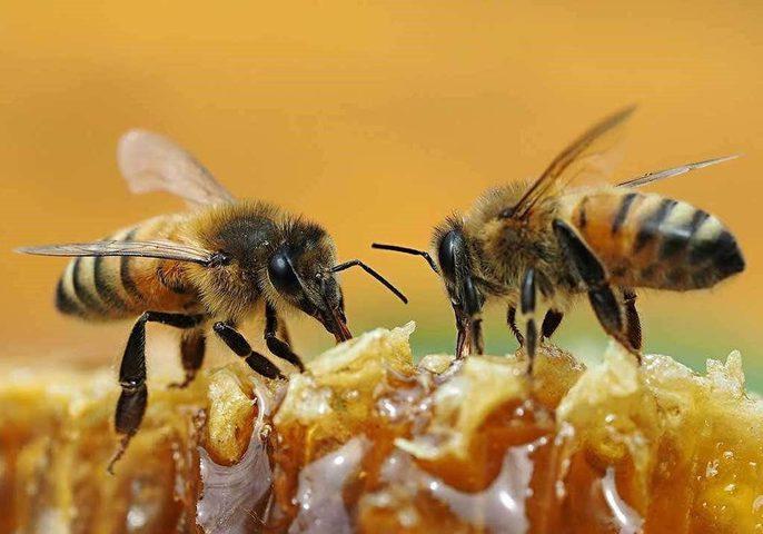 مستعمرة من النحل تحول حفل زفاف إلى مأتم