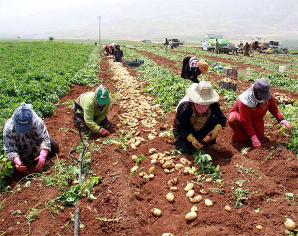"""""""بال تريد"""" يبحث تعزيز حركة المنتجات الزراعيةبين المحافظات"""