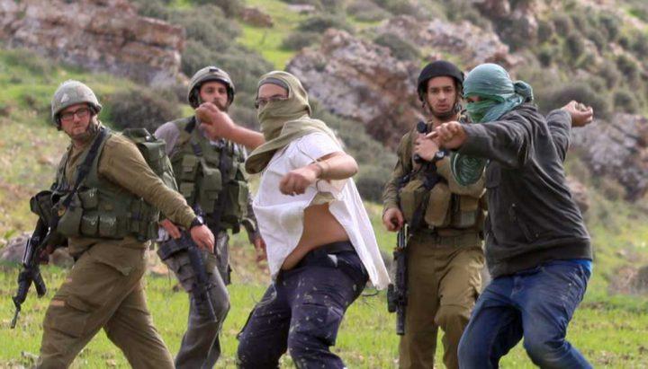 بيت لحم:مستوطنون يتلفون 140 شتلة زيتون في بلدة الخضر