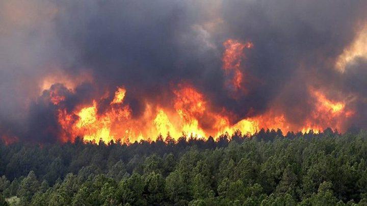 رئيس وزراء الجزائر: الحرائق نتيجة فعل إجرامي