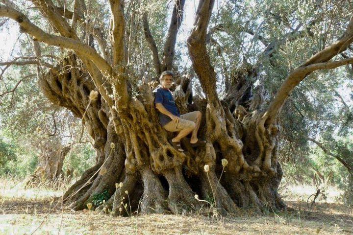 اليونان.. احتراق شجرة زيتون عمرها 2500 عام