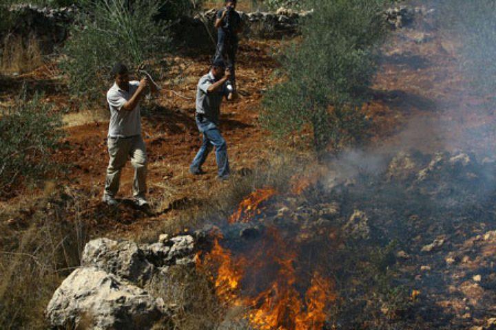 مستوطنون يضرمون النار بعشرات اشجار الزيتون جنوب نابلس