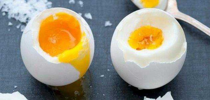 إنعاش حياة جنين دجاجة داخل بيضة مفتوحة بشكل جزئي