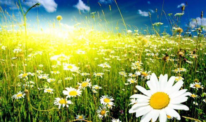 الطقس: درجات الحرارة أقل من معدلها السنوي العام بقليل