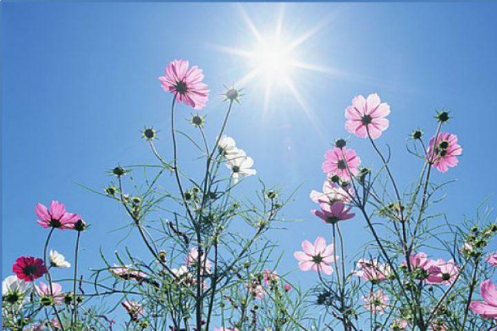 الطقس: الحرارة أقل من معدلها السنويالعام بحدود3 درجات