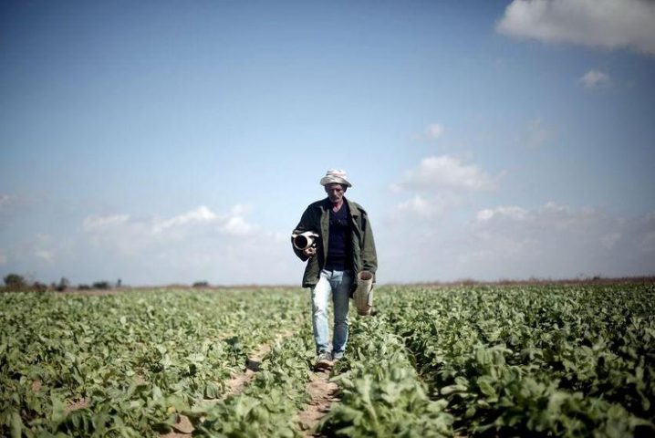 الإحصاء والزراعة يباشران في التعداد الزراعي2021