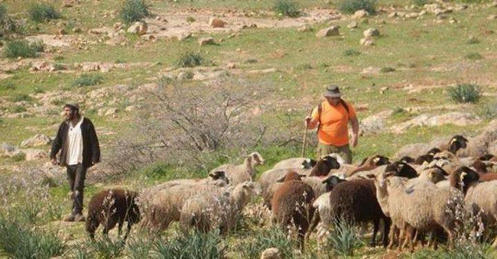 مستوطنون يهاجمون رعاة الماشية في خلة مكحول بالأغوار الشمالية
