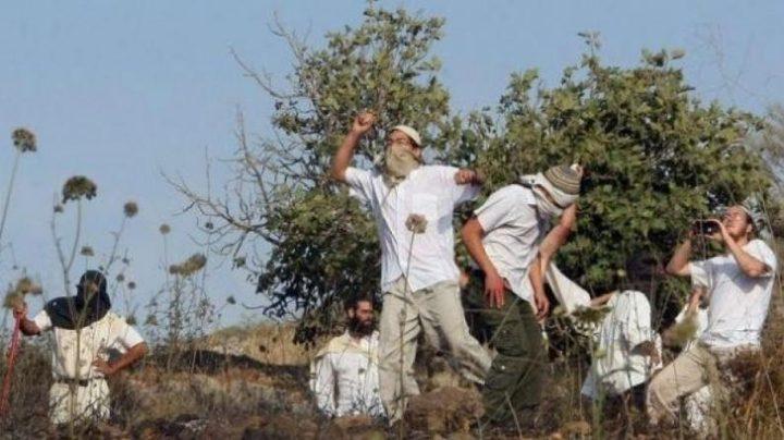 نابلس: مستوطنون يهاجمون قاطفي زيتون في بورين