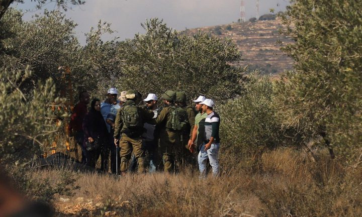 مستوطنون يعتدون على مزارعين في قرية كفر ثلث أثناء قطافهم الزيتون