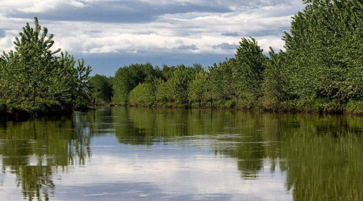 تطوير طريقة لصناعة البطاريات من مياه المستنقعات