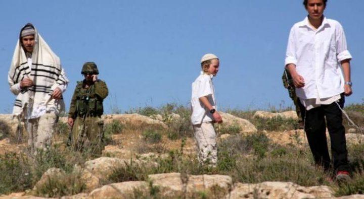 مستوطنون يسرقون ثمان الزيتون من أراضي سبسطية