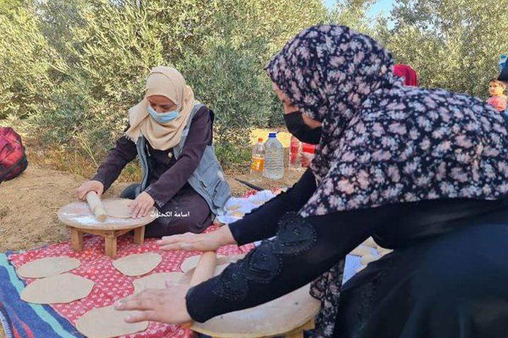 فزعة شبابية لمساعدة أصحاب الأراضي في جني الزيتون شرق المغازي تصوير أسامة الكحلوت